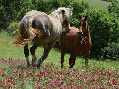 Cavallineifiori